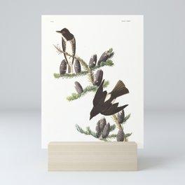 Olive sided Flycatcher by John Audubon Mini Art Print