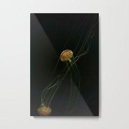 Tiger Sea Nettle Jellyfish or Chrysaora Wurlerra Metal Print