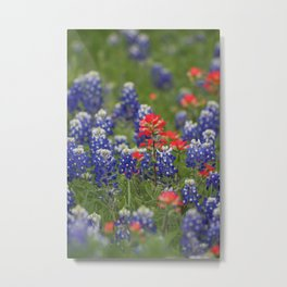 Texas Bluebonnet Metal Print