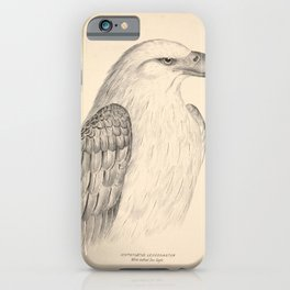 Vintage Print - Companion to Gould's Birds of Australia (1877) - White-Bellied Sea Eagle iPhone Case