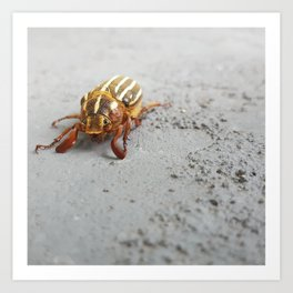 Spiritual Visit from a Scarab Beetle Art Print