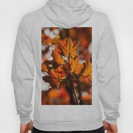 autumn's leaves Hoody