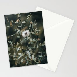 Moody Dandelion Nature Photography Stationery Cards