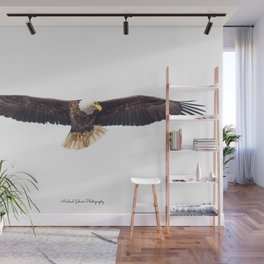 Gorgeous Bald Eagle in May Wall Mural