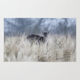 Cute little fallow deer standing between tall grass. Rug