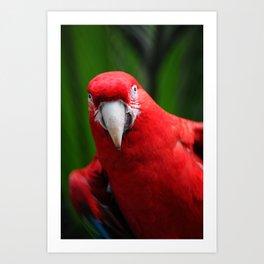 Red Sexy Art Print