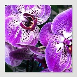 Purple Amethyst Tropical Exquisite Orchid Flowers Canvas Print