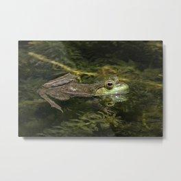 Green Frog in Pond Metal Print