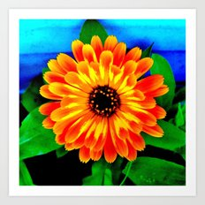 Orange Marigold Art Print