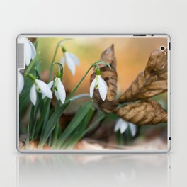 Opposites new and old in the garden Laptop & iPad Skin
