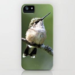 Hummingbird Perch iPhone Case