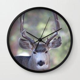 Watercolor Deer, Mule 05, RMNP, Squinter Wall Clock