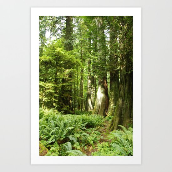 Cathedral Grove Art Print