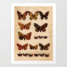 Butterflies and Moths Art Print
