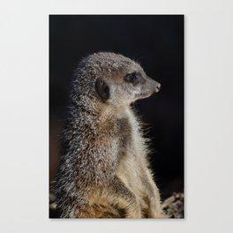 Meerkat guard Canvas Print