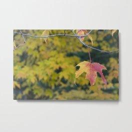 Acer Leaf Metal Print