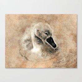 Cygnet Swan & Water Droplet Canvas Print