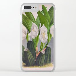 Vintage White Orchid Anguloa Uniflora Lindenia Orchid Clear iPhone Case