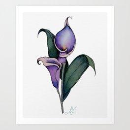 Purple Calla Lillies in Watercolor Art Print