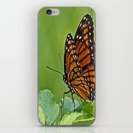 Viceroy Butterfly iPhone Skin