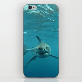 Great White Shark Carcharadon carcharias iPhone Skin