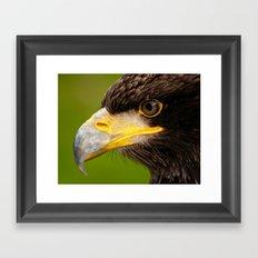 Intense Gaze of a Golden Eagle Framed Art Print