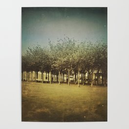 Somewhere a Park / Un parque de algún lugar Poster