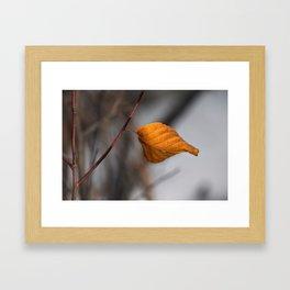 Lone Fall Leaf Framed Art Print