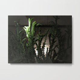 Nighttime in the Garden, 6 Metal Print