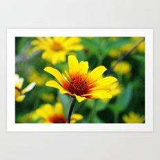 Prairie Flower Art Print