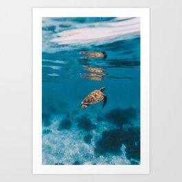Turtle iii Art Print