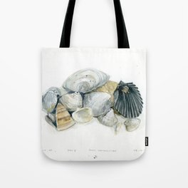 Seashell Composition 3 Tote Bag