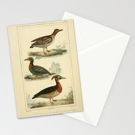 109-Petrel, Sarcelle, Canard Huppe2 Stationery Cards