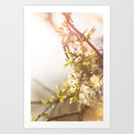 Sunny Blossom Art Print