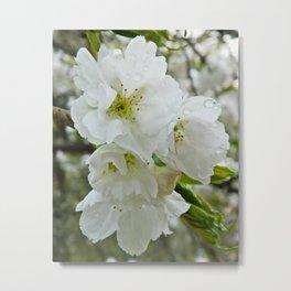 Rainkissed Blossom Metal Print