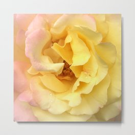 Summer Rose in Pink and Yellow Metal Print