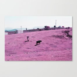 Look It's A Cow Canvas Print
