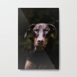 Red Dobie Metal Print