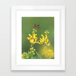 flowers6 Framed Art Print