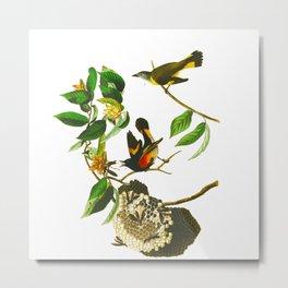 Vintage Scientific Bird & Botanical Illustration Metal Print