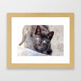 Sweet looking black kitty with big, beautiful eyes. Framed Art Print