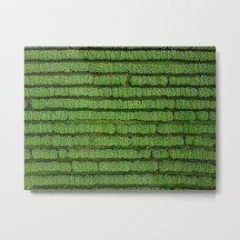 Tea plantation rows Metal Print