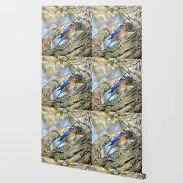 Bluebird in Tree Wallpaper