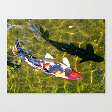 Koi with Shadow Canvas Print