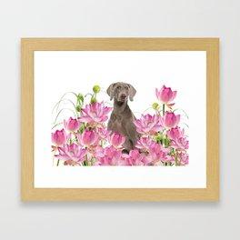 Weimaraner Lotos Flowers Framed Art Print