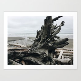 Driftwood on the Pacific Coast Art Print