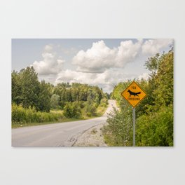Fox crossing Canvas Print