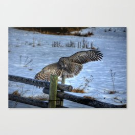 Great Grey Arriving Canvas Print