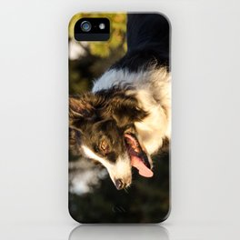 Border Collie in Natural Light iPhone Case