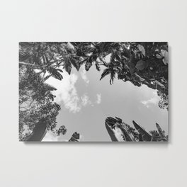 Rainforest Canopy - Tropical Sky Black and White Metal Print